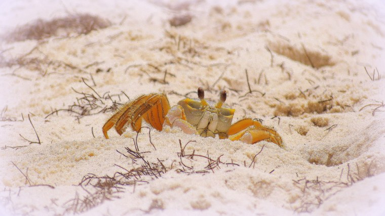 The Little Things - Post 3 - Crab on the beach.JPG