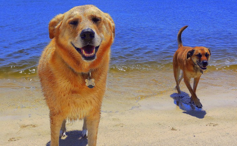 The Little Things - Post 3 - Puppies on the beach.JPG